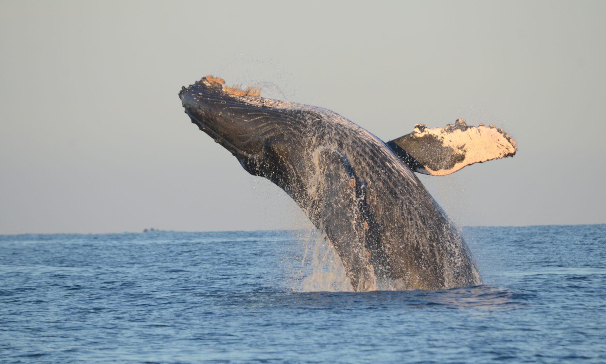 Proyecto de Investigación de las Ballenas de Guerrero